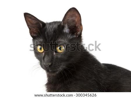 portrait of black cat on white - stock photo