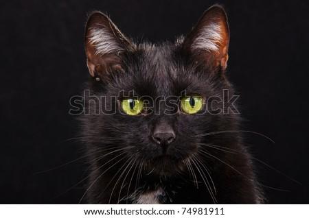 Portrait of black green-eyed kitten against black background isolated - stock photo
