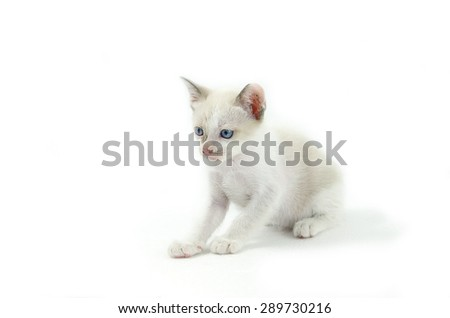 Portrait of blue-eyed cat isolated on white background - stock photo - stock photo