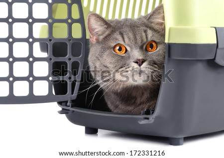 Portrait of British gray cat inside a plastic cage on white background - stock photo