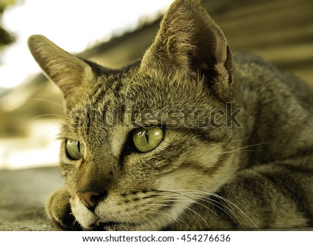 Portrait of brown-eyed cat isolated on white background Little gray kitten portrait up isolated on white background.cat, portrait, kitten, cut, whiskers, fur, studio, pet, white, space, fun, baby, mam - stock photo