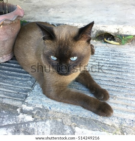 Portrait of brown-eyed cat on background
