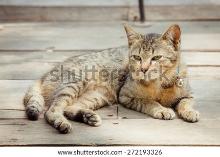 Portrait of brown eyed cat on old wooden - stock photo