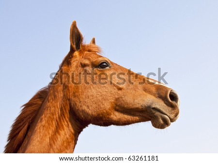 Portrait of brown horse from below against blue sky - stock photo