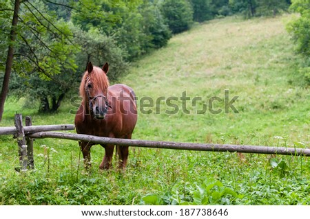 Portrait of brown horse on the green field. - stock photo