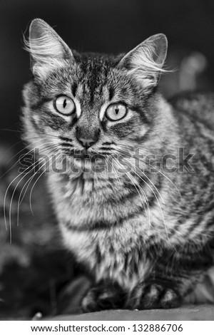 Portrait of cat. - stock photo