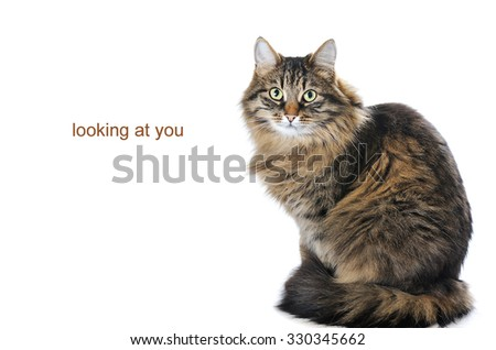portrait of cat isolated on white background - stock photo