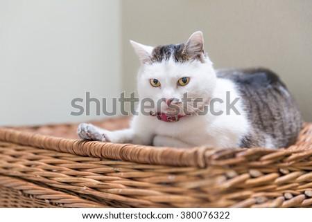 portrait of cat sitting on wicker basket - stock photo