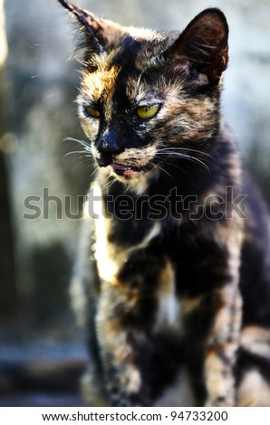 Portrait of cat such as black tiger pattern. - stock photo
