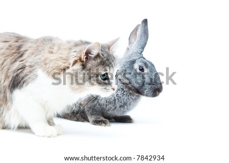 portrait of cat with rabbit on white with small shadows - stock photo