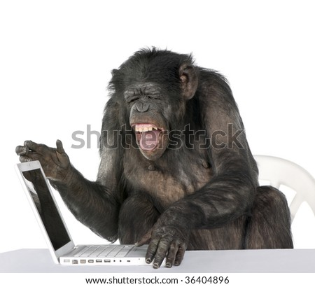 Portrait of Chimpanzee playing with a laptop against white background, studio shot - stock photo