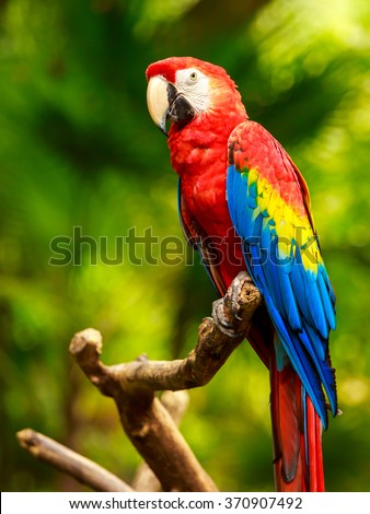 Portrait of colorful Scarlet Macaw parrot against jungle background - stock photo
