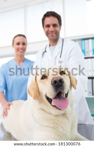 Portrait of confidence veterinarians with dog in clinic - stock photo