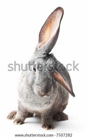 portrait of curious rabbit on white - stock photo