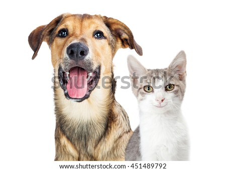 Portrait of cute and happy puppy and kitten with smiles on faces