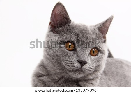 Portrait of  cute cat