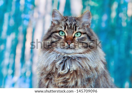 Portrait of cute cat sitting on forest background - stock photo