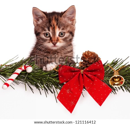Portrait of cute christmas kitten with empty board on white background - stock photo
