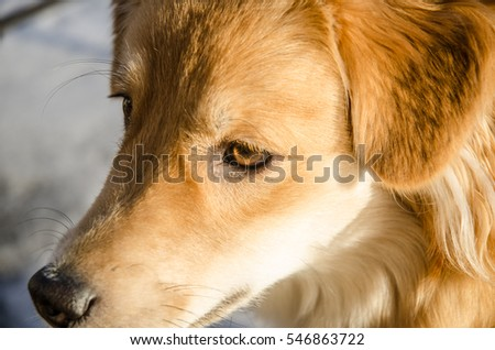 Portrait of cute dog in the garden covered with snow on sunny winter day