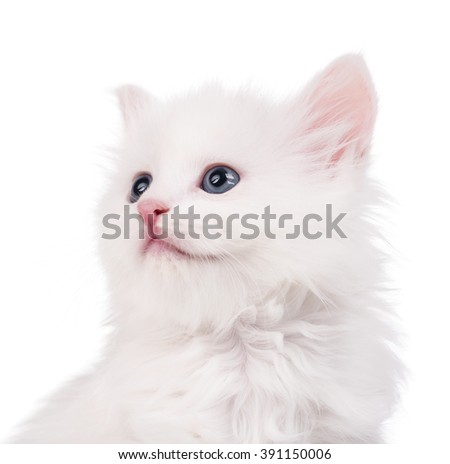Portrait of cute fluffy kitten over white background close-up - stock photo
