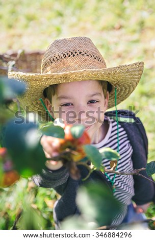 Portrait of cute happy kid with hat picking fresh organic apples from the tree. Nature and childhood concept.  - stock photo