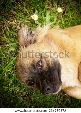 Portrait of cute little doggy on the grass.