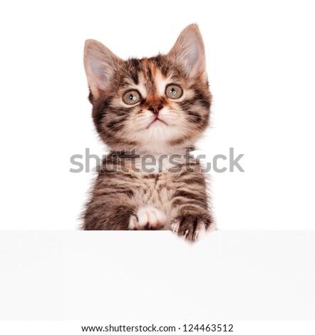 Portrait of cute little kitten with empty board on white background - stock photo