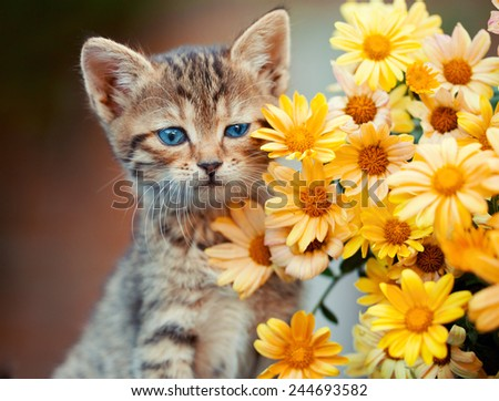Portrait of cute little kitten with flowers