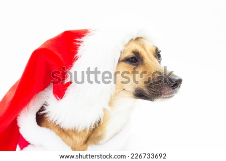 Portrait of cute mutts in red Santa hats on a white background