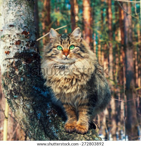 Portrait of cute siberian cat  on the tree in the forest - stock photo