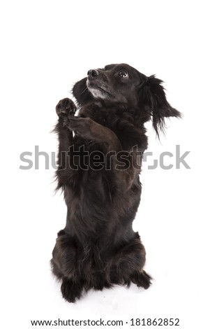 Portrait of cute, sit pretty, mixed breed dog - stock photo