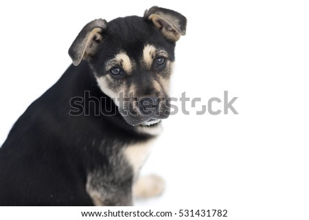 Portrait of cute stray puppy looking with hope against white background