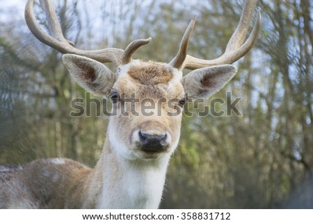 portrait of deer