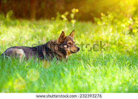 Portrait of dog in profile outdoors against green background - stock photo