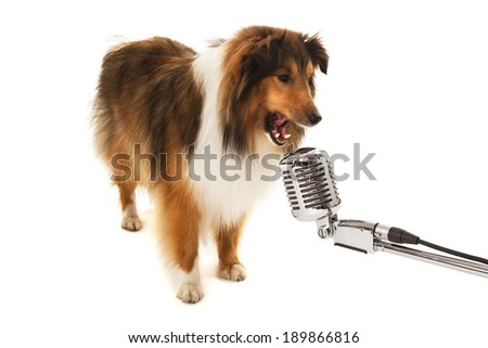 Portrait of dog singing on vintage microphone isolated over white background - stock photo
