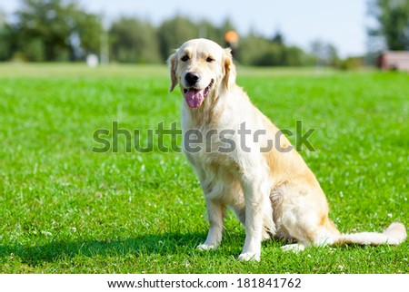 Portrait of dog sitting on the green grass - stock photo