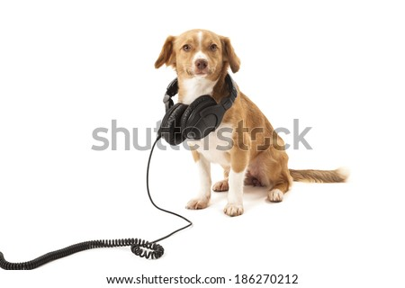 Portrait of dog with headphone isolated on white background