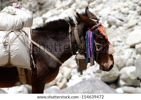 Portrait of donkey with heavy load at Everest Base Camp trek in Sagarmatha  region, Nepal ,Asia - stock photo