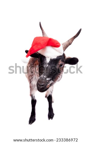 Portrait Of dwarf Goat in christmas hat On White - stock photo