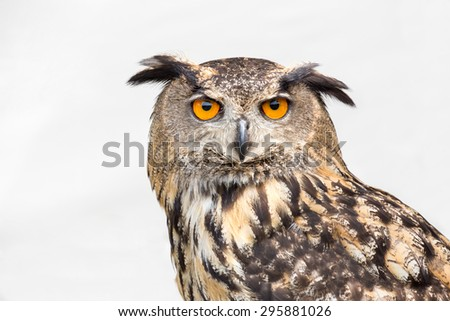 Portrait of eagle owl against grey sky - stock photo