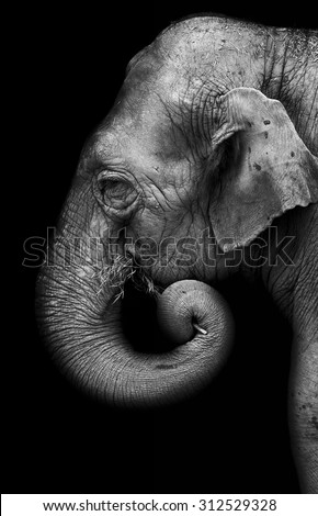 Portrait of elephant