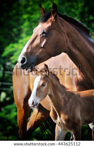 Portrait of foal with his mother in summer field