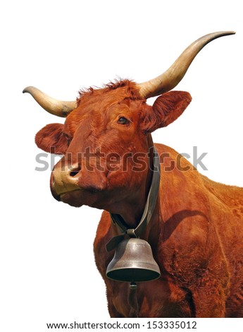 Portrait of french cow isolated on white - stock photo