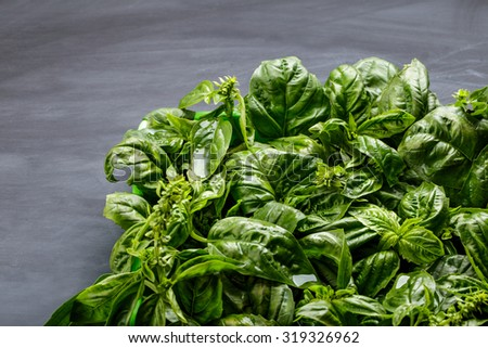 portrait of fresh basil leaves with black board for background - stock photo