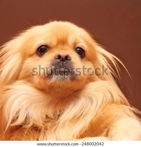Portrait of funny dog - stock photo