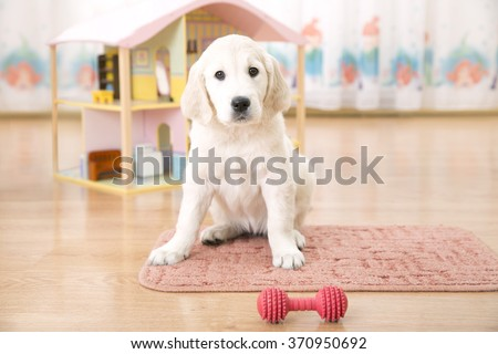Portrait of golden retriever puppy sitting on the floor - stock photo