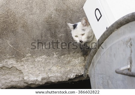 Portrait of homeless, shabby, dirty, stray cat, peeking behind thrown cardboard boxes in the filthy garbage container- photographed in a small downtown alley - stock photo