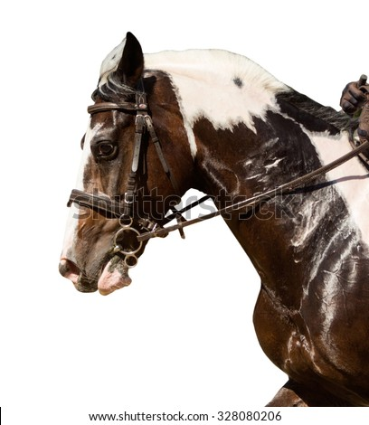 Portrait of horse â?? isolated on white - stock photo