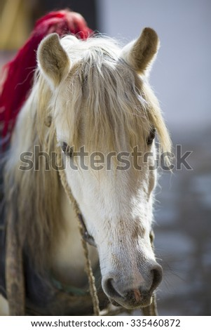 Portrait of horse with blurred background in TIbet (Seelctive focus)
