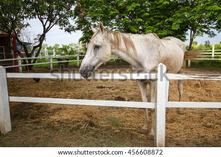Portrait of horses in the farm.  - stock photo